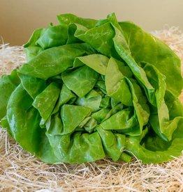 Salade - krop (per stuk)
