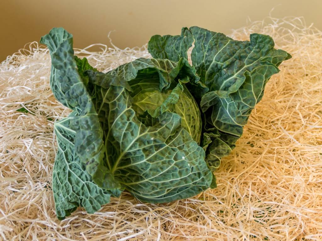Savoy cabbage (per piece)