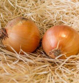 Belgian onion (per 100 gram)