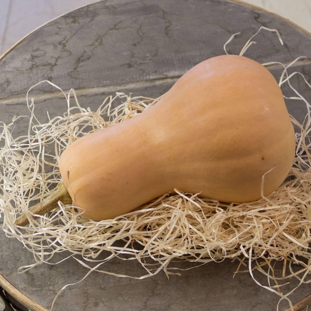 Pompoen Butternut (per stuk ~ 1,50 kg)