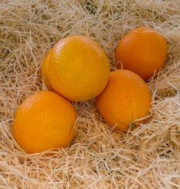 Oranges a presser (par 5 pièces)