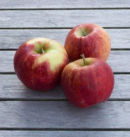 Appels Jonagold (per stuk)