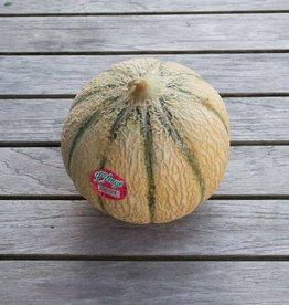 Cavaillon Melon (per piece) - PROMO@2