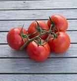 Vine tomate Elite (per ~kg)