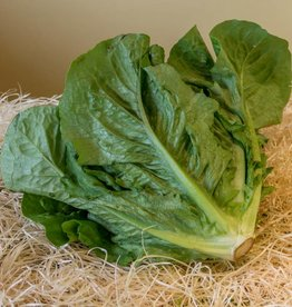 Chinese cabbage (per piece)