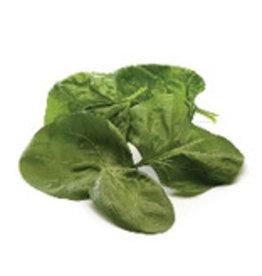 Spinazie volle grond (per 100 gram)