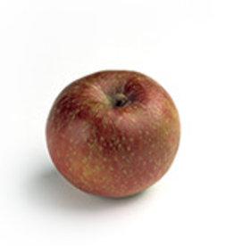 Appels Boskoop - stoof (per stuk)
