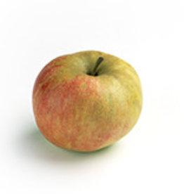 Apple Elstar (per 500 gram)