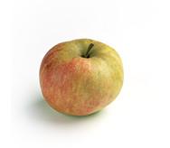 Appels Elstar (per stuk)