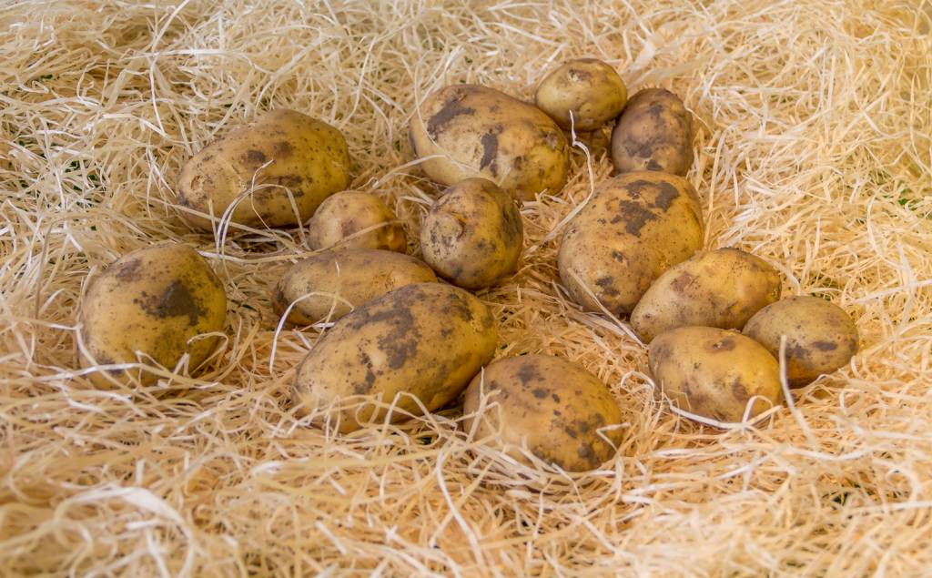 Potatoes new (per 100 gram)