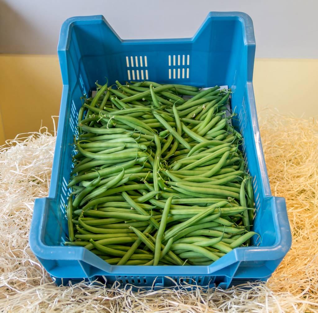 Beans (per 100 gram)