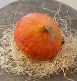 Potimaron pompoen (per stuk)