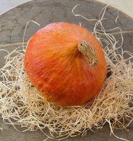 Potimaron pumpkin (per piece)- BIO & LOKAAL