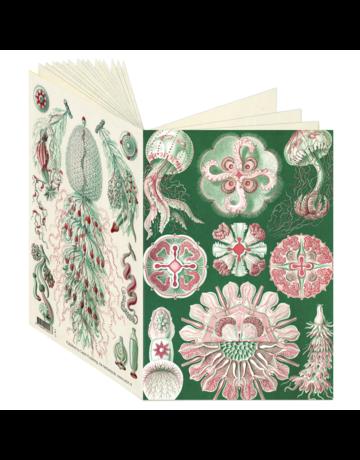 Ernst Haeckel Journal CB27