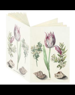 Tulip, Maria Sibylla Merian Journal CB137