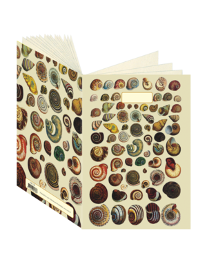 Shells, Cabinet of Natural Curiosities Journal CB139