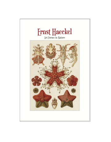 Art Forms in Nature, Ernst Haeckel Postcard Pack PP047