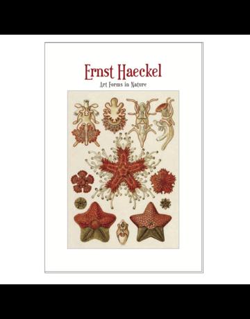 Art Forms in Nature, Ernst Haeckel Postcard Pack PP047