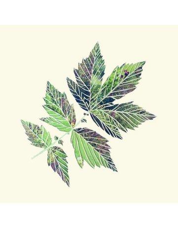 Leaves Coasters
