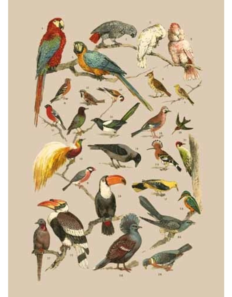 Catch Publishing Special pack of 50 postcards - Flora & Fauna