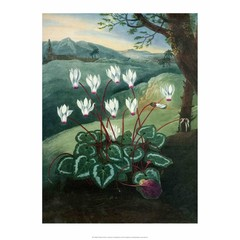 Botanical Print, Cyclamen