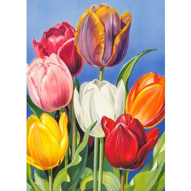 Tulips from Amsterdam, Magnet