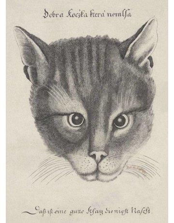 Cat's Head 1646 Magnet