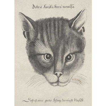 Cat's Head, 1646