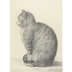 Cat Drawing, 1815