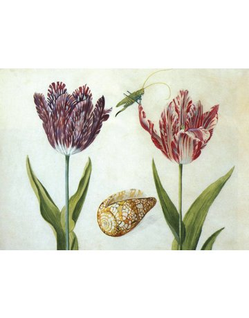 Two Tulips, a Shell and a Grasshopper Magnet