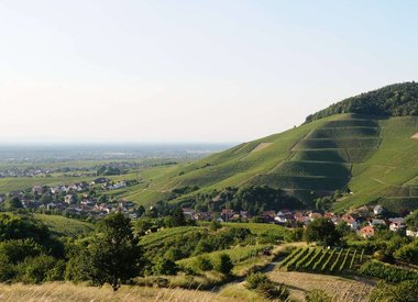Weingut Sterneberg