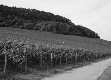 Luxemburgse wijn