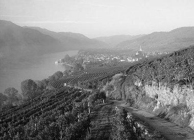 Oostenrijkse wijn