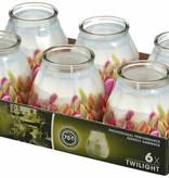 Bolsius Professional Twilight Tulpen, 6 stuks