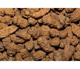 tigernuts tijgernoten xxl