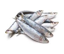 pre-baits dood aas sardine
