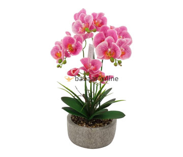Pot - Orchidee - Roze - Cambria