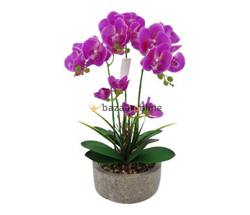Pot - Orchidee - Paars - Cambria