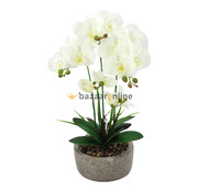 Pot - Orchidee - Wit - Cambria