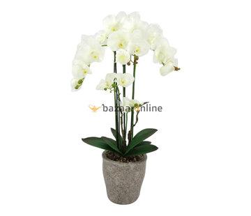 Pot - Orchidee - Wit - Milto