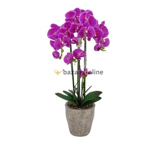 Pot - Orchidee - Paars - Milto