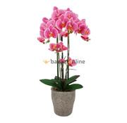 Pot - Orchidee - Roze - Milto