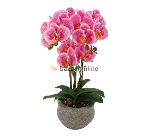 Pot - Orchidee - Roze - Vanda