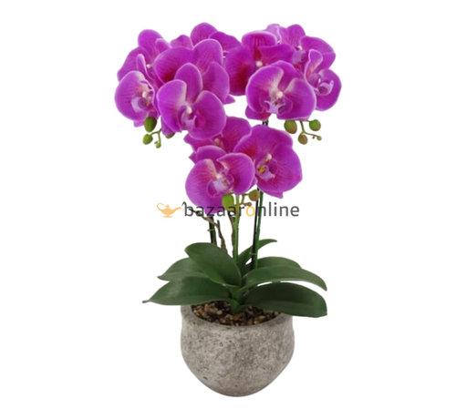 Pot - Orchidee - Paars - Vanda
