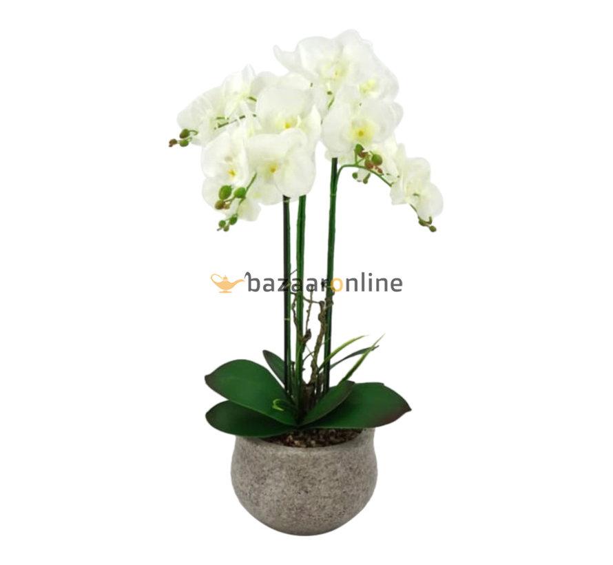 Pot - Orchidee - Wit - Vanda