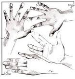 Nuukk Porselein Stickers Hands