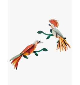 Studio Roof 3D Wall Decoration Paradise Bird Obi