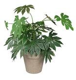 Zuperzozial Blumentopf  Jungle Fever XL braun