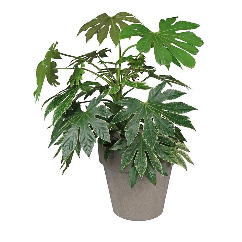 Zuperzozial Blumentopf  Jungle Fever XL grau