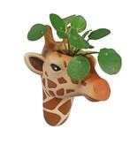 The Zoo Hanging Flowerpot Giraffe